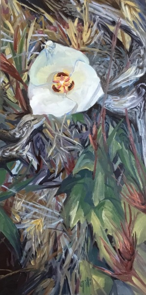 Mariposa Lily 2